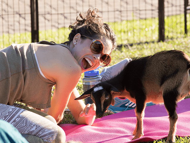 Vintage Villas Goat Yoga | Tricycle Creative